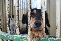 066618144 Pomoc zvieratám [Archív] - Strana 4 - PORADA.sk